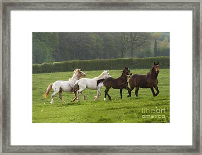 One After One Framed Print by Angel  Tarantella