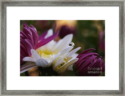 One And Only Framed Print by Stela Taneva