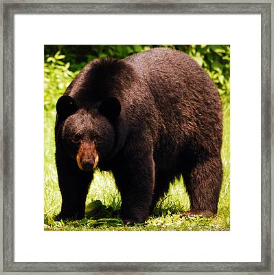 One Big Bad Momma Framed Print by Lori Tambakis