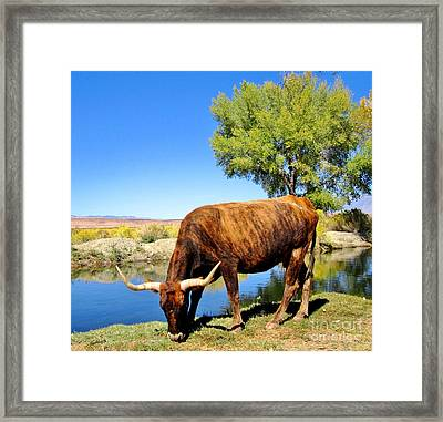 Framed Print featuring the photograph One Big Boy by Marilyn Diaz