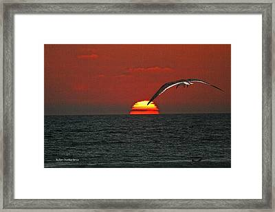 Framed Print featuring the photograph One Black Skimmers At Sunset by Tom Janca