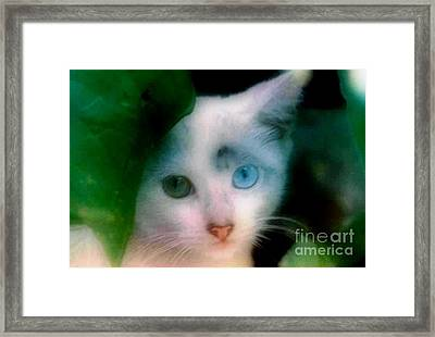 One Blue One Green Cat In New Olreans Framed Print