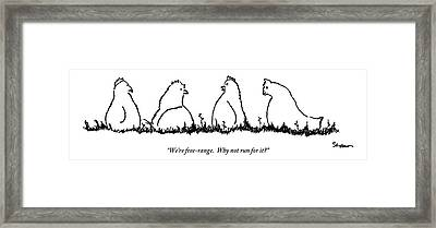 One Chicken Speaks To Several Others On A Patch Framed Print
