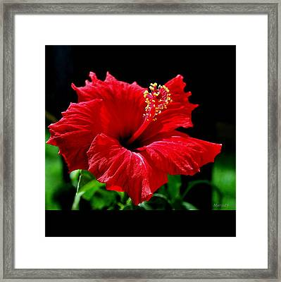 One Day Flower Framed Print