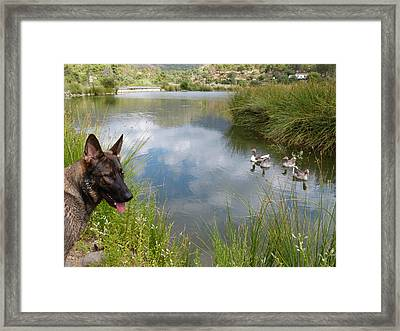 One Day With Nora Framed Print by Janina  Suuronen