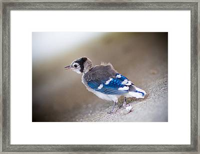 one day...I will fly Framed Print by Shane Holsclaw