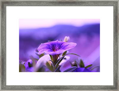 One Evening With Million Bells Framed Print