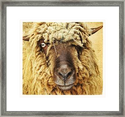 Earl Ricky Framed Print by Edward Hamm