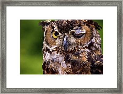 One Eyed Jack Framed Print by Kathi Isserman