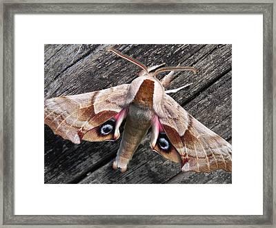 One-eyed Sphinx Framed Print by Cheryl Hoyle