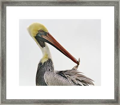 One Feather Framed Print by Paulette Thomas
