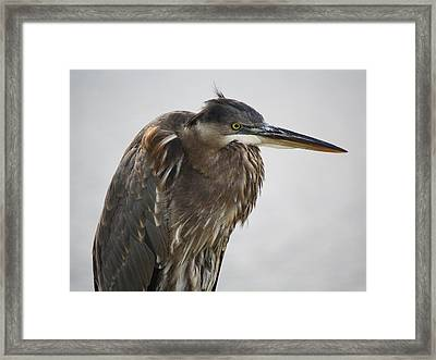One Fine Feather - # 3 Framed Print by Paulette Thomas