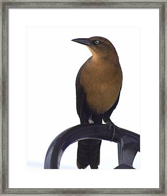 One Foot Bird Framed Print by DerekTXFactor Creative