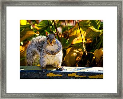 One Gray Squirrel Framed Print by Bob Orsillo