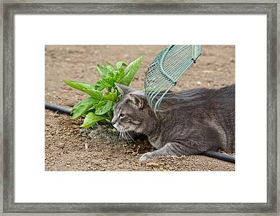 One Happy Cat Framed Print