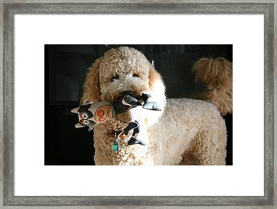One Happy Labradoodle Framed Print by Horst Duesterwald