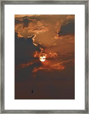 One Hi One Lo Framed Print by Tony Reddington