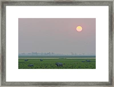 One-horned Rhinoceroses In Kaziranga Framed Print
