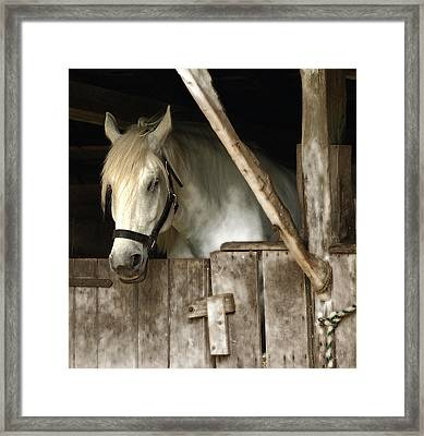 Framed Print featuring the photograph One Horse  by Raymond Earley