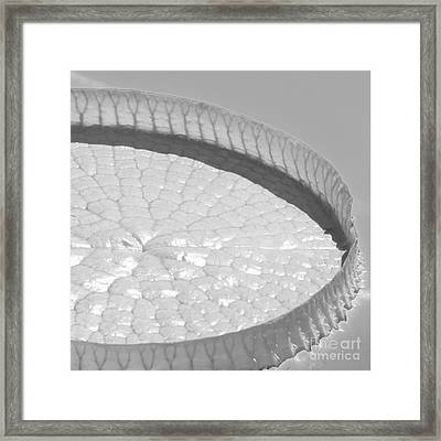 One Huge Lily Pad #3b Framed Print