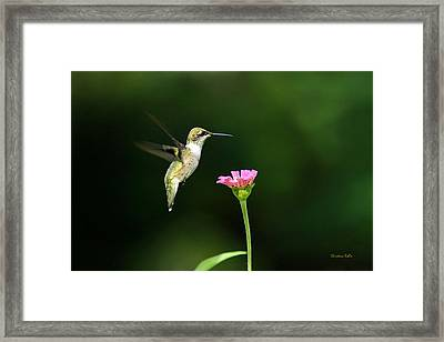One Hummingbird Framed Print