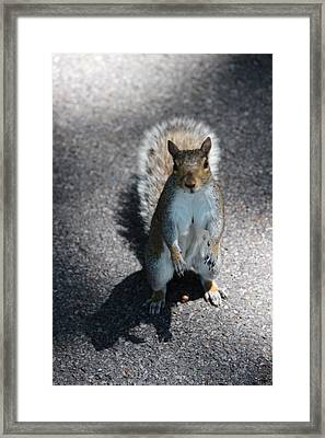 One Is Just A Tease Framed Print