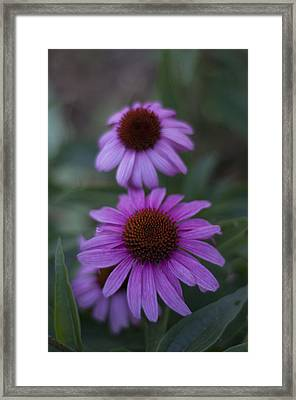 One Is Shy Framed Print by Miguel Winterpacht