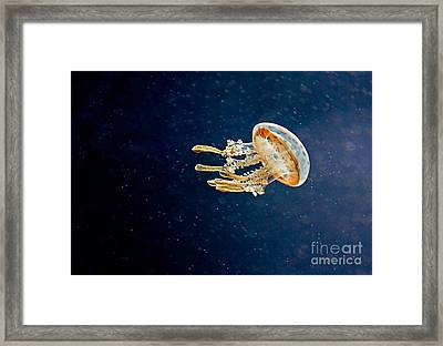 One Jelly Fish Art Prints Framed Print