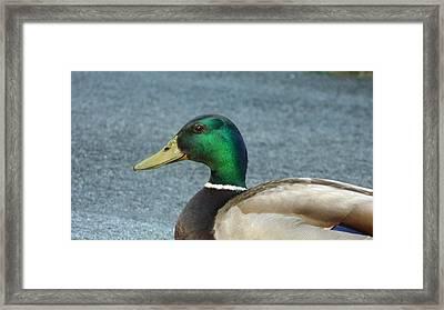One Last Look Framed Print by David  Ortiz