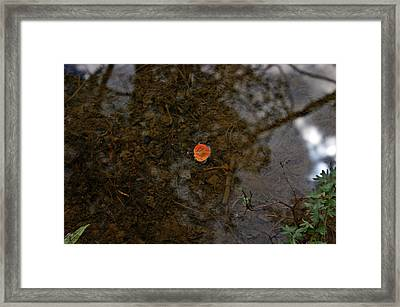 Framed Print featuring the photograph One Leaf by Jeremy Rhoades