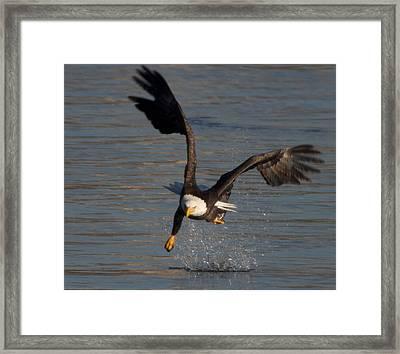 One Legged Grab Framed Print by Glenn Lawrence