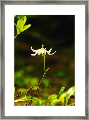 One Lily Almost Alone Framed Print by Jeff Swan