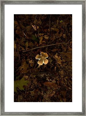 Framed Print featuring the photograph One Little Mushroom by Lena Wilhite