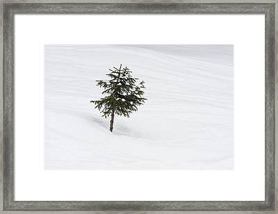 One Little Tree In The Snow In Winter Framed Print