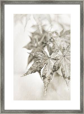 One Misty Moisty Morning Framed Print