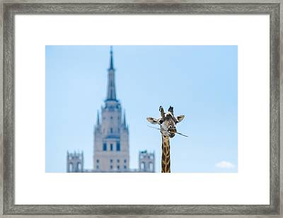 One More Bite To Outgrow The Tallest 2 Framed Print by Alexander Senin