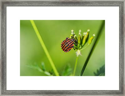 One More Bottle Doesn't Hurt - Featured 3 Framed Print by Alexander Senin