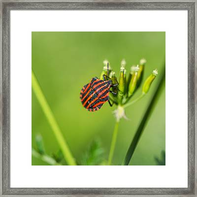One More Bottle Doesn't Hurt - Square - Featured 3 Framed Print by Alexander Senin
