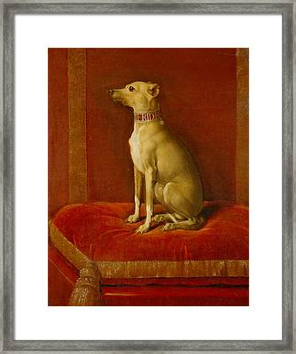 One Of Frederick II Italian Greyhounds Framed Print by German School