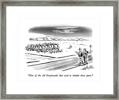 One Of The Old Greyhounds That Used To Inhabit Framed Print by Ed Fisher