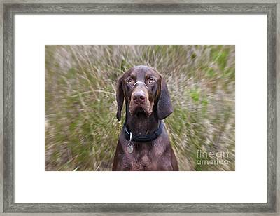 One Of Those Days Framed Print by Michelle Orai