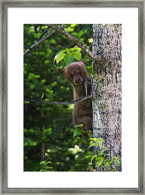 One Of Three Framed Print by Mark Kiver