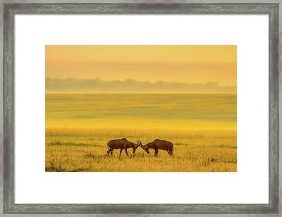 One On One Framed Print