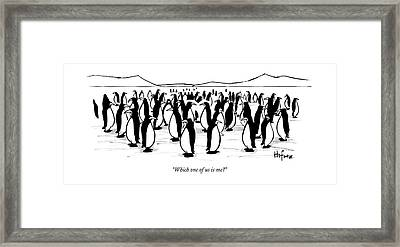 One Penguin In A Large Group Of Penguins Speaks Framed Print by Kaamran Hafeez