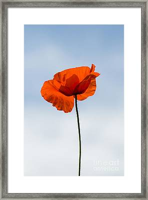 One Poppy Framed Print by Anne Gilbert