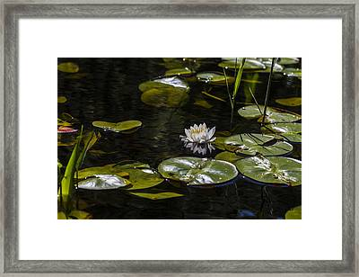 One Quiet Afternoon Framed Print by Andrew Pacheco