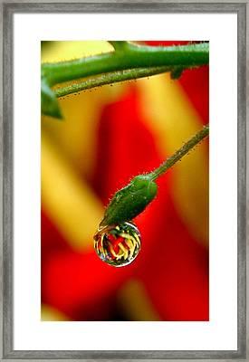 One Raindrop Framed Print by Rona Black