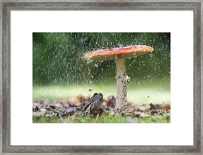 One Rainy Day Framed Print