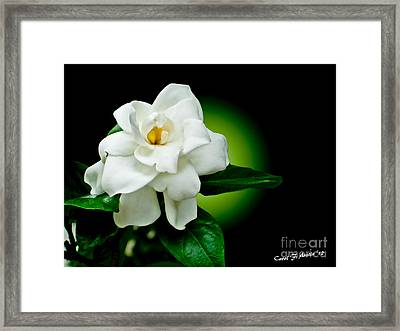 One Sensual White Flower Framed Print by Carol F Austin