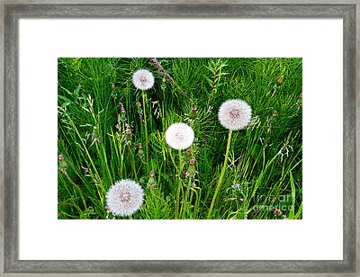 One Shines Framed Print